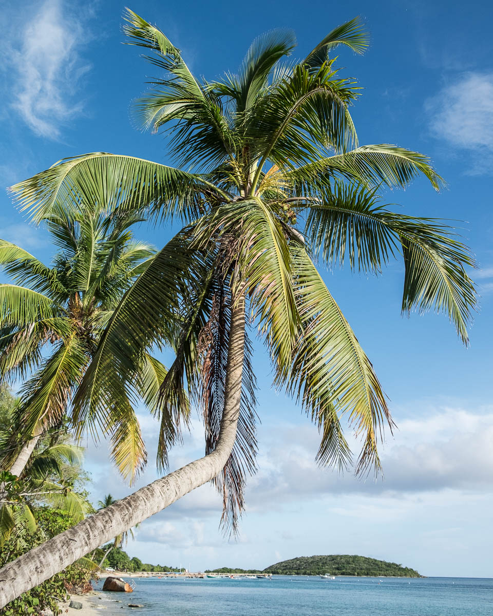 palm tree beach espranza
